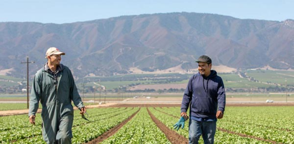 Two farmworkers in Gonzales CA